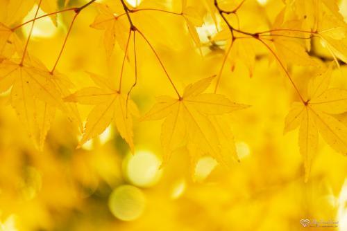 leaves21