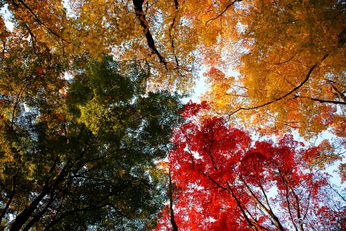 leaves4