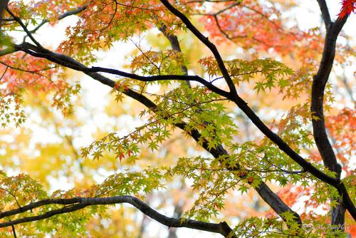 leaves7